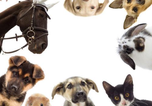 Green Republic Pet Wellness